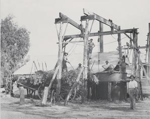 Eucalyptus Oil - Australia's first export