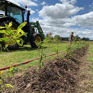 Farm-Planting-300x300