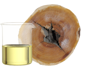 Sandalwood spicatum