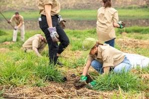 Planting koala trees at Buhlambar