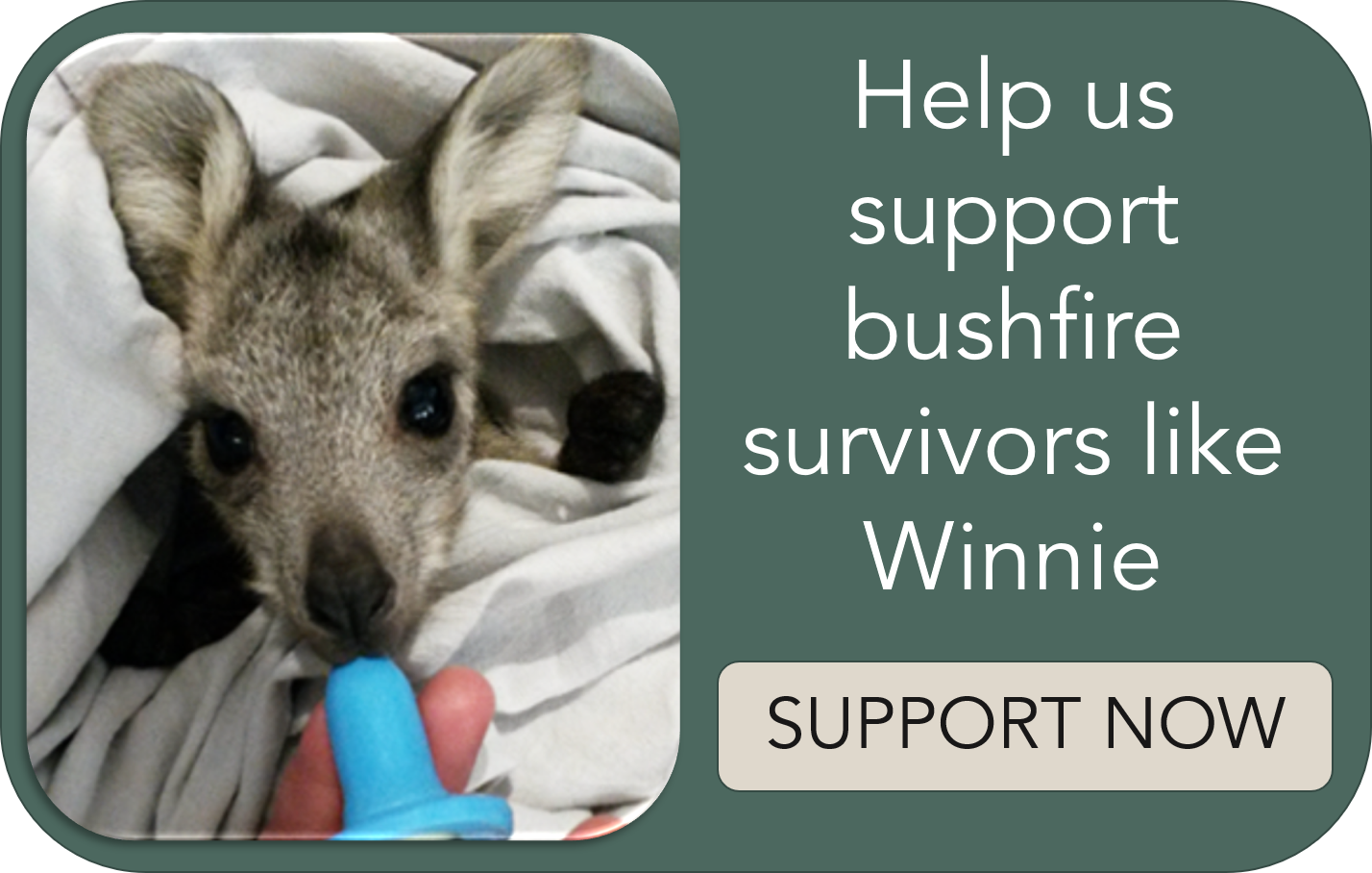 Winnie_bushfire_Support button