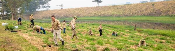 team planting trees pano 600px