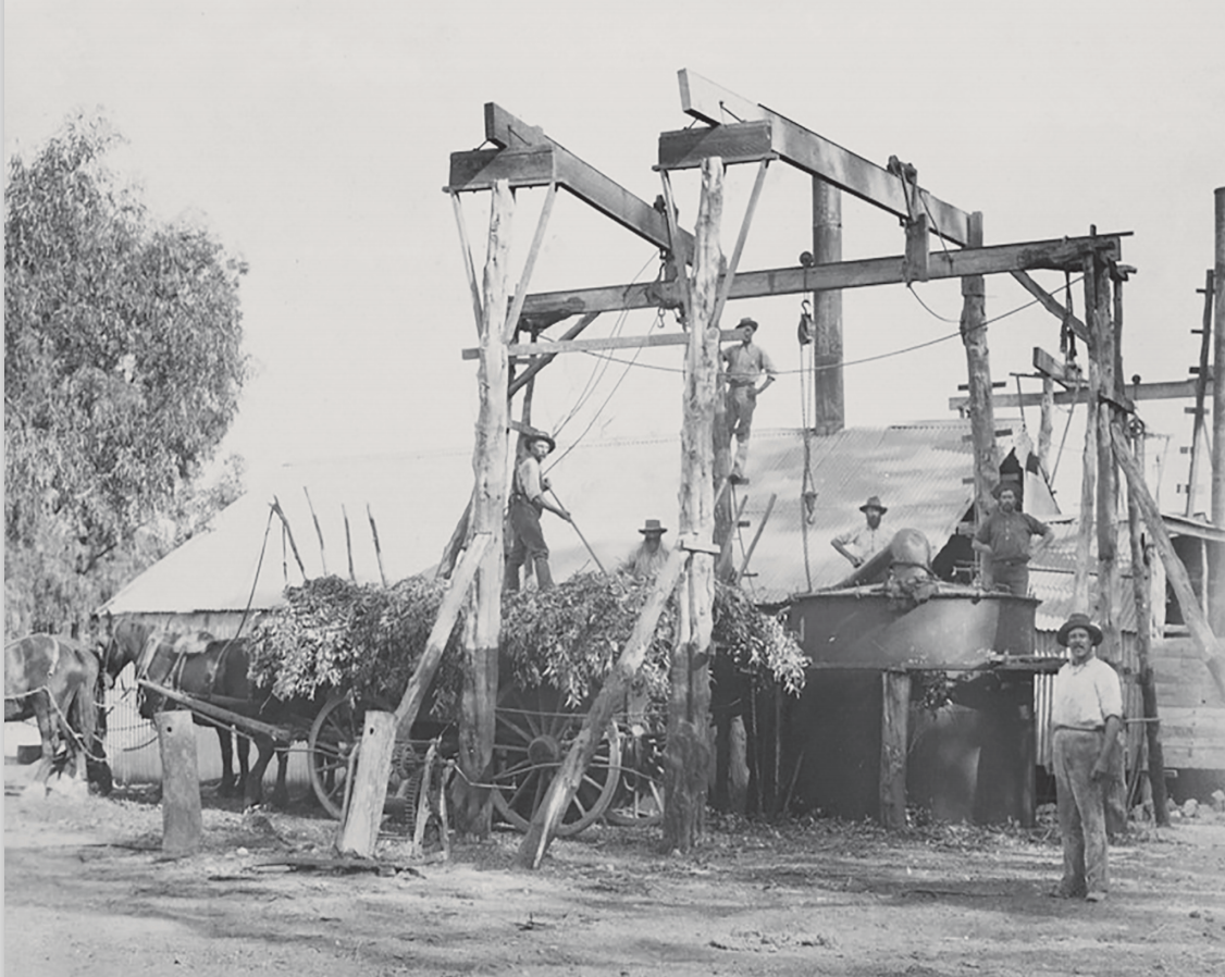 The History of Eucalyptus Oil Production in Australia