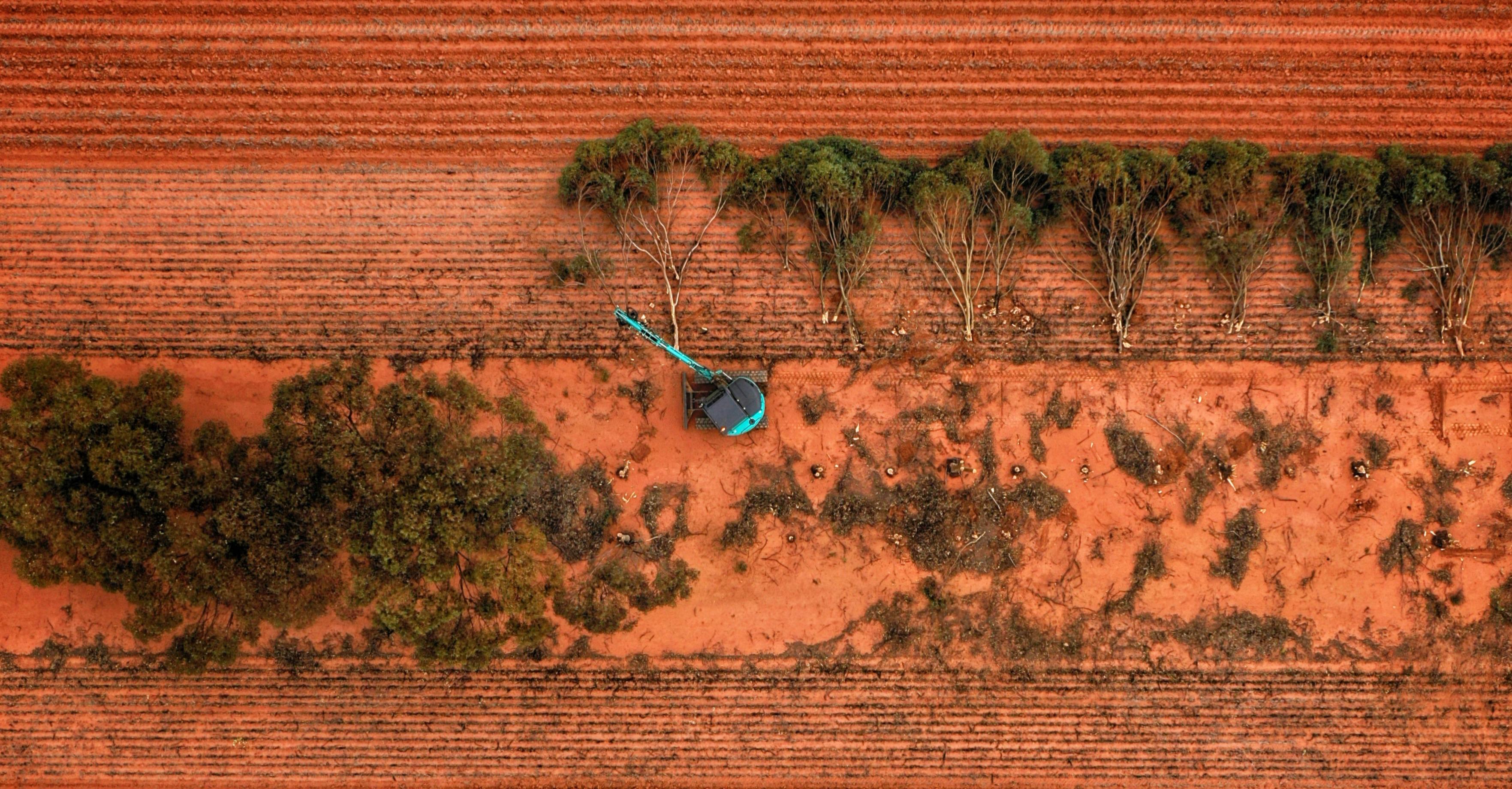 Saving Kochii trees by harvesting them